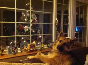 Picture of dog with Christmas decorations